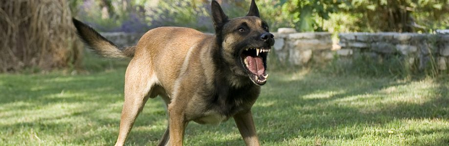 Dangerous German Shepard dog
